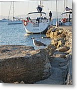 Sea Gull 1 Metal Print