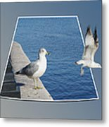 Sea Gull Away Out Of Bounds Metal Print
