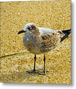 Sea Gull Metal Print