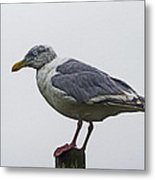 Sea Gull On The Dock On A Foggy Day Metal Print