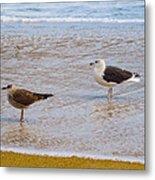 Sea Gull Pair Metal Print