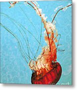 Sea Jelly Metal Print by Sharon Coty