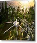 Sea Lily Metal Print