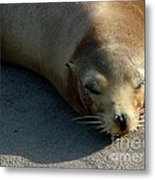 Sea Lion-00178 Metal Print