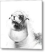 Sea Lion Abstract Metal Print