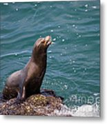 Sea Lion Posing Metal Print