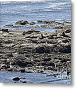 Sea Lion Resort Metal Print