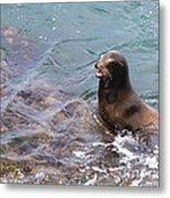 Sea Lion Smile Metal Print