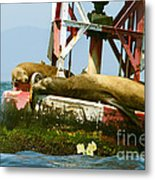 Sea Lions Floating On A Buoy In The Pacific Ocean In Dana Point Harbor Metal Print