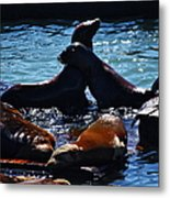 Sea Lions In San Francisco Bay Metal Print