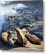 Sea Lions Seek Shelter Metal Print