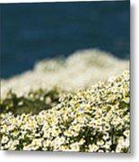 Sea Mayweed And The Sea Metal Print