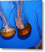 Sea Nettle Jelly Fish 5d25076 Metal Print