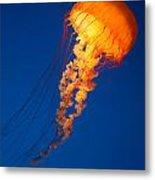 Sea Nettles V 8 Metal Print