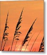 Sea Oat Sunset Metal Print by JC Findley