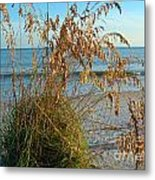 Sea Oats 1 Metal Print