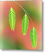 Sea Oats Grass Seedheads Metal Print