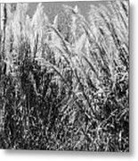 Sea Oats In The Glades Metal Print