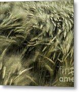 Sea Of Barley  Metal Print
