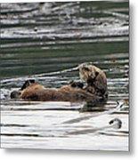 Sea Otter Profile Metal Print