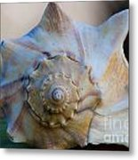 Sea Shell Metal Print