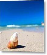 Sea Shell On The Beach Metal Print