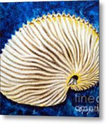 Sea Shell Original Oil On Canvas No.2. Metal Print by Drinka Mercep