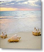 Sea Shells At Sunset Metal Print
