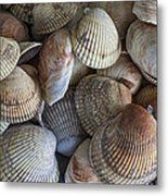 Sea Shells Metal Print by Jeff Swanson