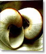 Sea Shells Meeting Metal Print