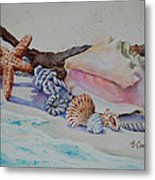 Sea Shells Two Metal Print