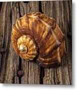 Sea Snail Shell On Old Wood Metal Print