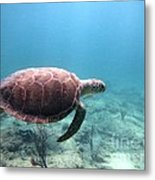 Sea Turtle 5 Metal Print