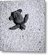 Sea Turtle In Black And White Metal Print