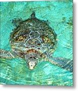 Single Sea Turtle Swimming Through The Water Metal Print