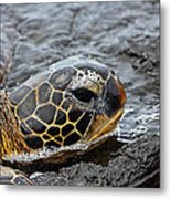 Sea Turtle Puako Tidepools Metal Print