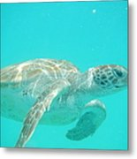 Sea Turtle Time Metal Print