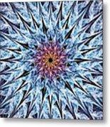Sea Urchin Metal Print