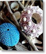 Sea Urchin Duo Metal Print