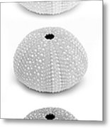 Sea Urchins Black And White Vertical Metal Print