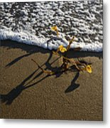 Sea Weed And A Wave Metal Print