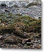 Sea Weed Metal Print