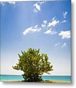 Seagrape Tree Metal Print