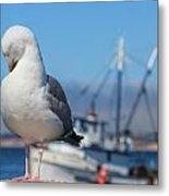 Seagull 3 Metal Print