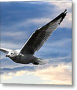Seagull And Clock Tower Metal Print