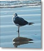 Seagull At Attention Metal Print
