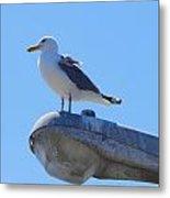 Seagull At Oregon Inlet 5 Metal Print