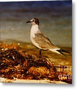 Seagull At The Keys Metal Print