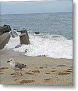 Seagull At The Sea Metal Print