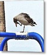 Seagull Balancing Act Metal Print